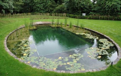 декоративно - плавальний ставок, Author: Sanny, Hcpslibraries